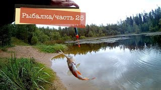 Ловля окуня на живца - Моя рыбалка часть 25