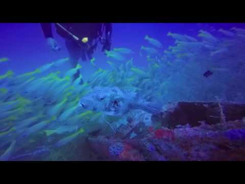 Papua New Guinea Diving Trip 2015