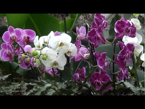 Orchids at Kew Gardens ✿ A Must See Orchid Extravaganza ✿