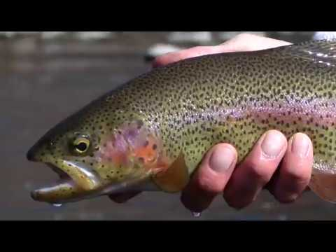 Eagle River Colorado: March Fly Fishing