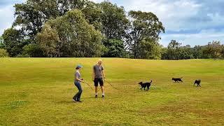 Eden Park Off-leash Dog Park Kelpie Meetup