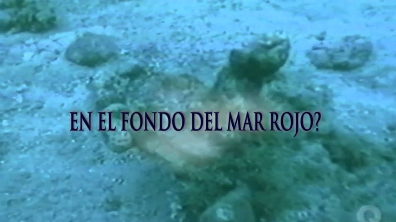 El Cruce Del Mar Rojo - Official Trailer (Red Sea Crossing - Spanish ...