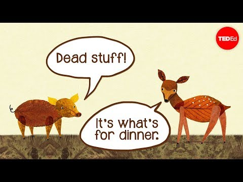 Video image: Dead stuff: The secret ingredient in our food chain - John C. Moore