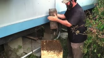The Perfect Bee Removal