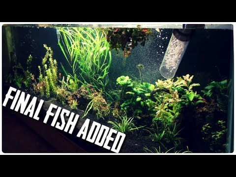 Finishing Up the 125 Gallon Nano Fish Aquarium