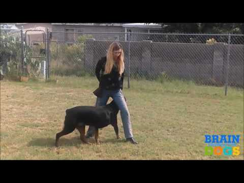 Dog Training York Pa