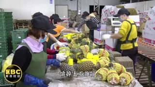 賣鳳梨年營收近億!揭台灣水果外銷大王
