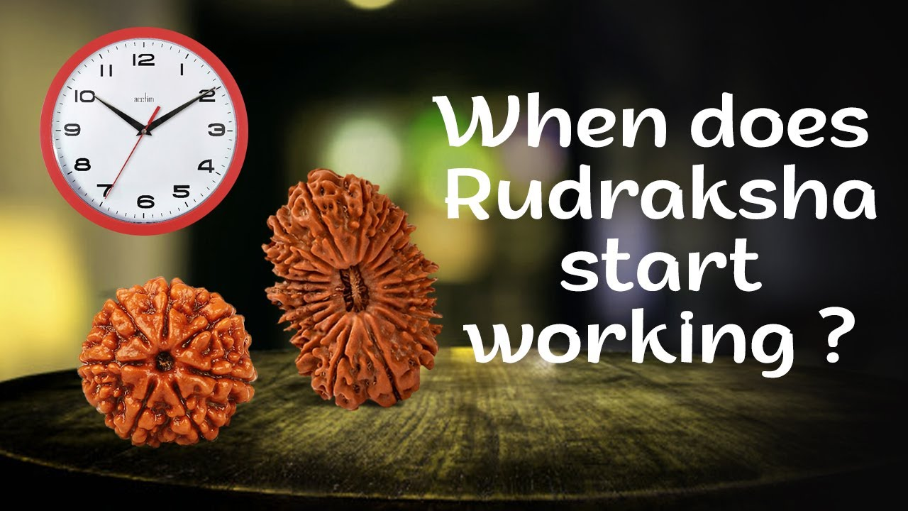 7 Mukhi Rudraksha, Saat mukhi, Benefits of Original Seven