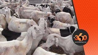 Le360.ma • Mauritanie la détresse des éleveurs face à la sécheresse