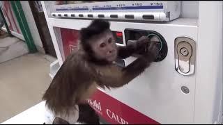 Топовая подборка. СМЕШНЫЕ ОБЕЗЬЯНЫ. Смешное видео про обезьян.