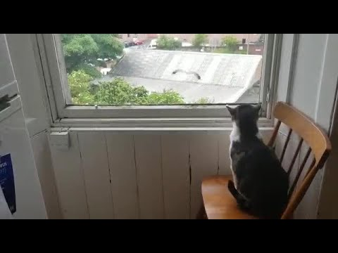 Cat scares away seagull trying to sit outside glass window