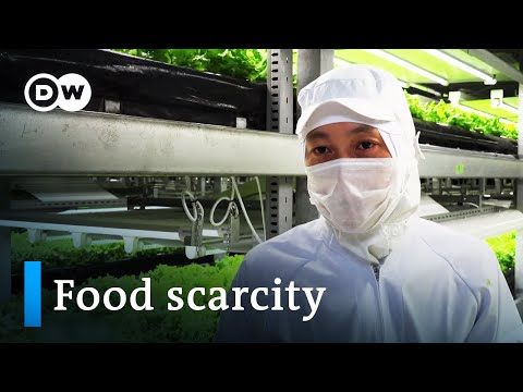 When food becomes scarce – high-tech farms of the future | DW Documentary