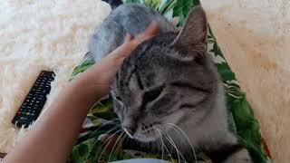 Фонд Умка: кошка Бастет мурлычит на ручках