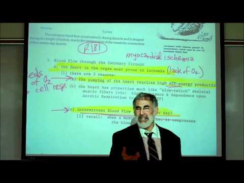 CARDIAC PHYSIOLOGY; PART 1 by Professor Fink.wmv