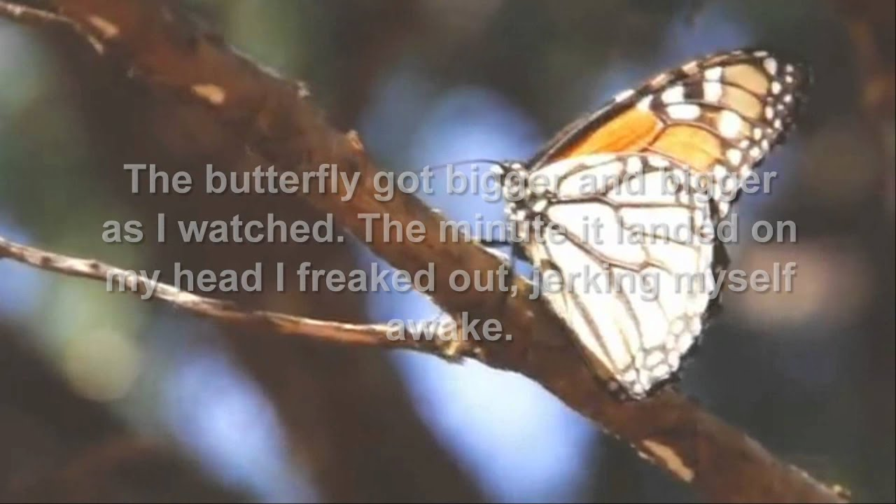 When a butterfly lands on you symbolism gallery symbol and sign butterflies to angel youtube butterflies to angel buycottarizona buycottarizona