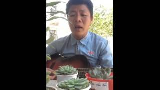 Tình em xứ quảng mùi nhất (Guitar Bolero Quang Lực )