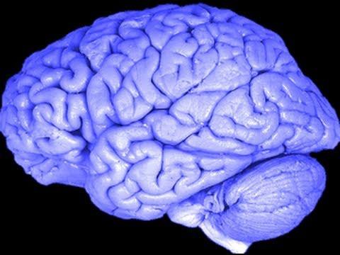 Conservative Brain Vs. Liberal Brain - Study