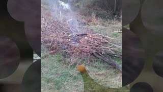 Výlov rybníka u dědy