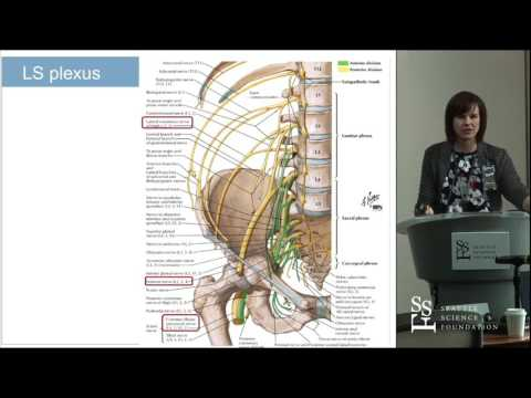 Surgeon Beware! Peripheral Conditions Masquerading as Radiculopathy - Michele L  Arnold, MD, FAAPMR,