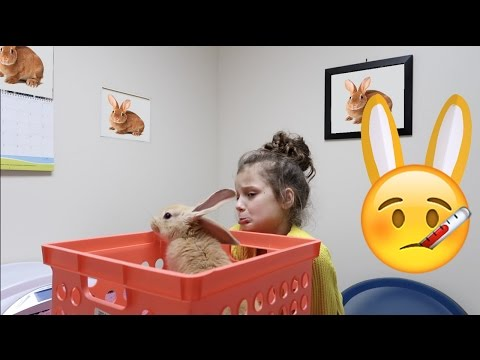 Sick Bunnies Go To The Vet! 🤒 (WK 325.3) | Bratayley
