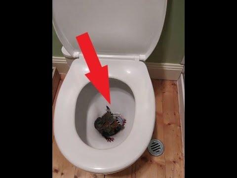 Открывая крышку унитаза, хозяин дома и не догадывался, кто там его поджидает!