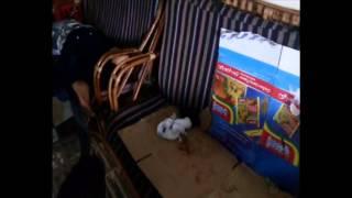 قناة السويس الجديدة :قطة تضع 7توآم وصاحبها يؤكد بشرة خير القناة الجديدة