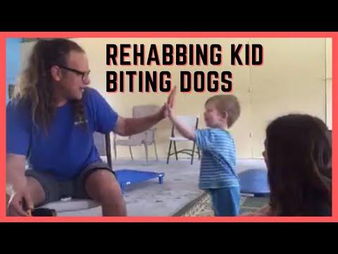 Dog bites kids, how to rehab aggressive dog training