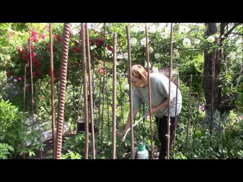 Супер экологичный раствор для лечения кустов помидор!!