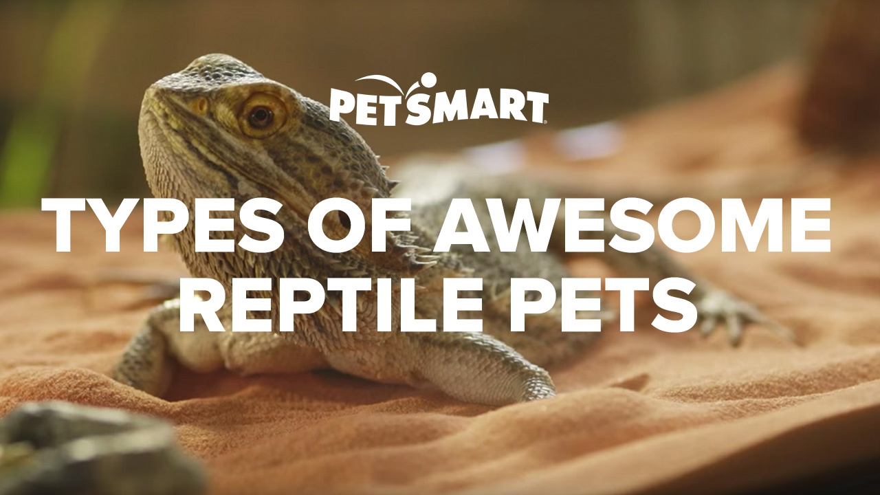 PetSmart's Types of Awesome Reptile Pets - YouTube