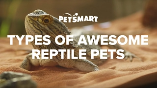 Types Of Reptile Pets - Petsmart