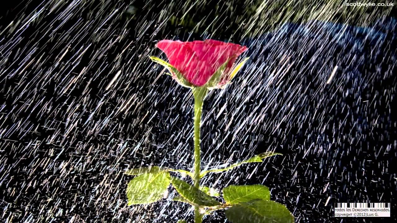 guns n roses november rain subtitulada en espa241ol hd