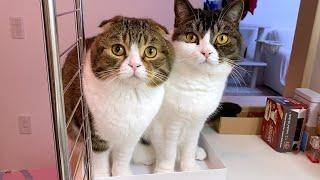 ご飯を鍋で炊いてみたら親子猫が興味津々で可愛すぎましたw