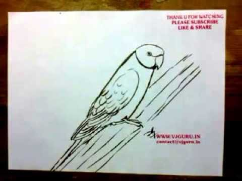 How to Draw a Parrot   YZArts   YZArts