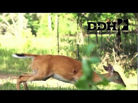 Deer video Kill Shot on Deer