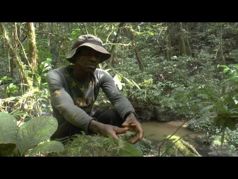 Born Free Cameroon Field Survey Vlog 06