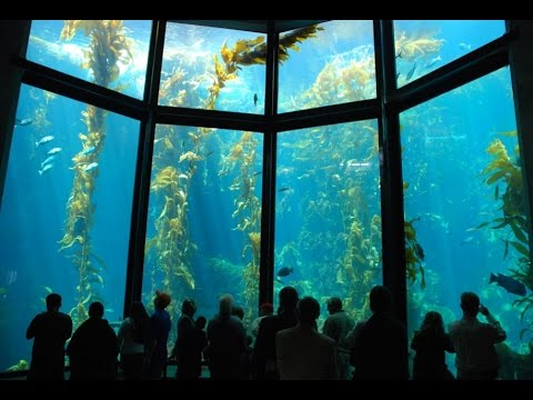 MONTEREY Bay AQUARIUM - California - Estados Unidos