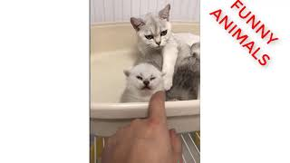 Funny Animals - Funny Cat - Funny Compilation - Cat Cute 2018 #5