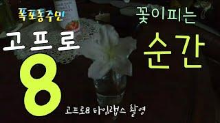 [kobo jeong] 고프로8로 흰 철쭉꽃 탄생 순간…
