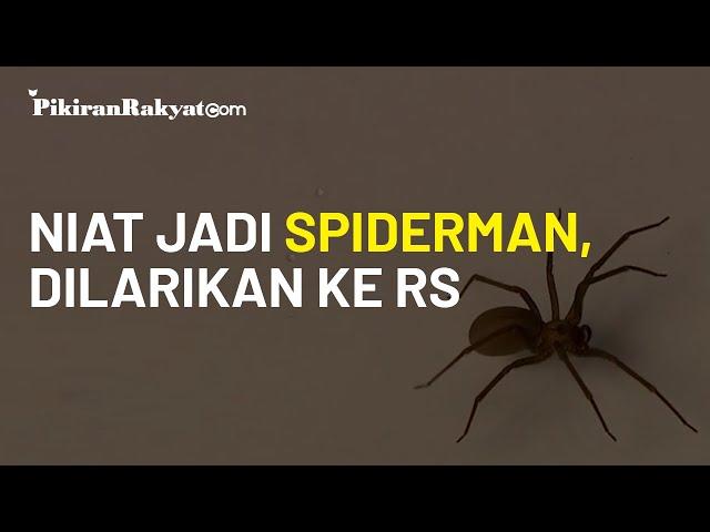 Berharap Jadi Superhero Spider-Man, Tiga Bocah di Bolivia Malah Harus Dilarikan ke Rumah Sakit