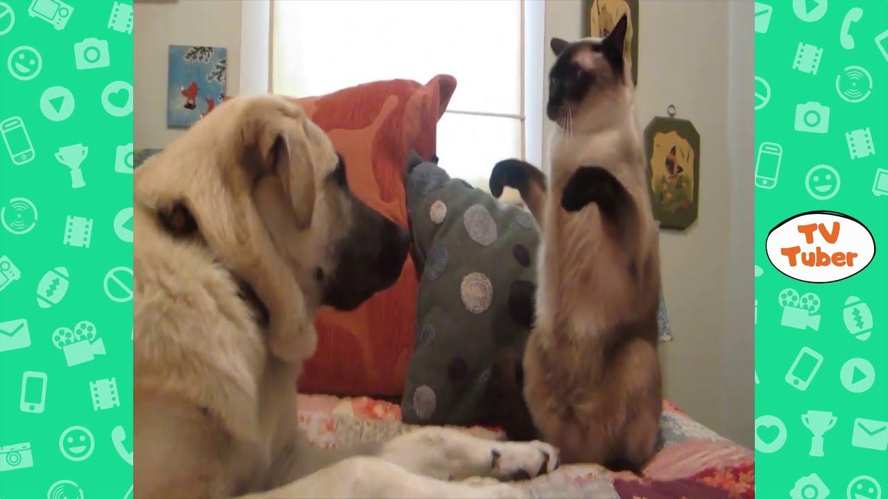 Faze comice cu animale 2020 | Faze tari | Incearca sa nu razi (Comedie) | Funny animal fails