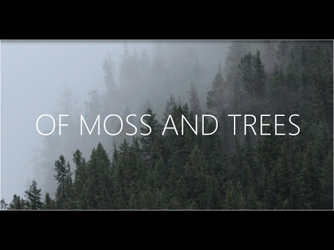 Of Moss and Trees