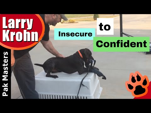 Building A Better Dog Through Play / Insecure To Confident
