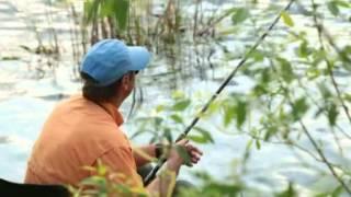 Диалоги о рыбалке. Майский жук и голавль.