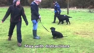 Tux - X Breed - 4 Week Residential Dog Training At Adolescent Dogs Uk - Barking At Visitors