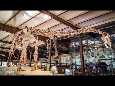 Dinosaurs | The Royal Belgian Institute of Natural Sciences | Brussels