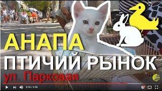 АНАПА 🌞 ПТИЧИЙ РЫНОК 🐤 🐶 🐱 (рядом с Восточным), 12 августа 2017 года.