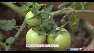 Tips to set a kitchen garden on the terrace in containers and pots | Poovali | News7 Tamil