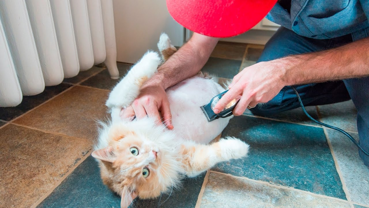 Shaving Cats: Pros And Cons