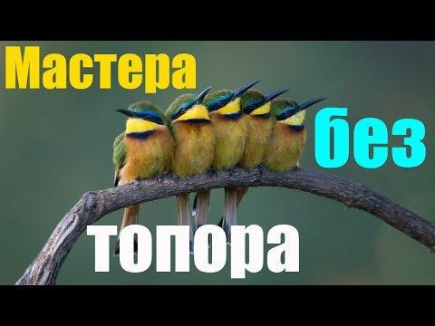 Мастера без топора 🐦 читаем и слушаем аудио сказку от Бианки Виталия Валентиновича для детей 👶