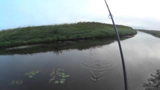 OmskSpinClub # 13 Щука и окунь на воблеры на малой реке (река Оша)